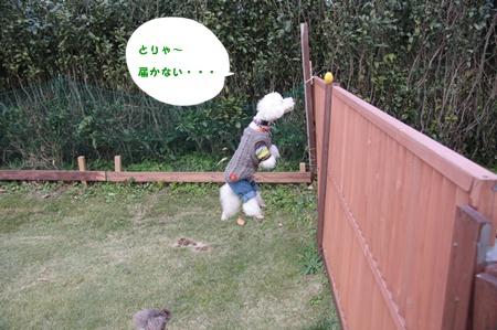 59_20111129014046.jpg
