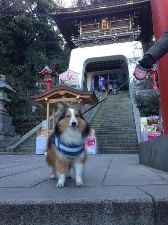 江の島神社0119
