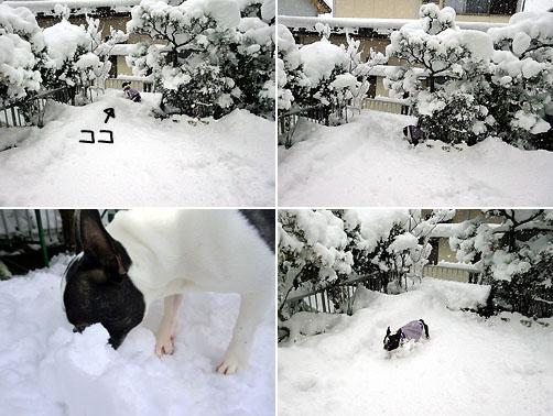 大雪やぁ~ん!!