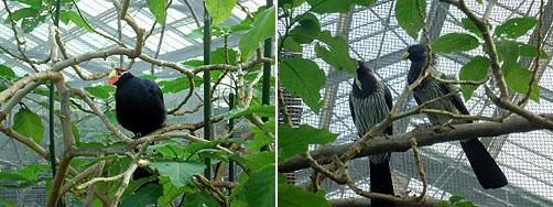 木々の鳥たち