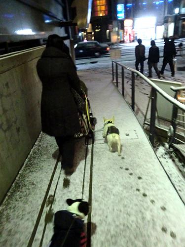 雪の京都市内