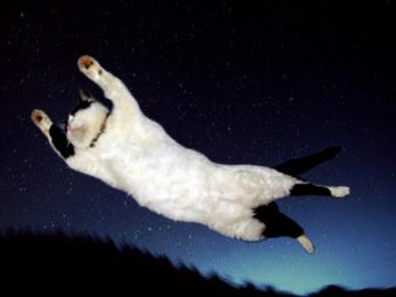 Flying Cat02