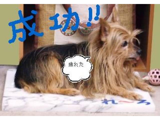 06-09 004 - コピーのコピーno