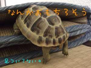 101029-02.jpg