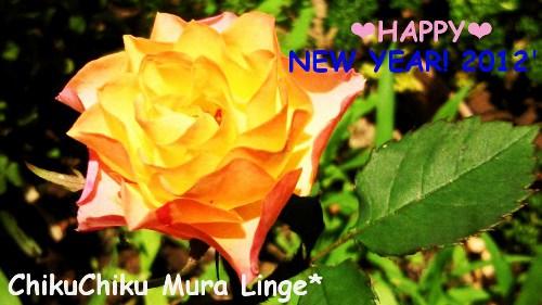 2012年薔薇☆