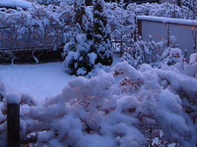 20110112_雪の朝