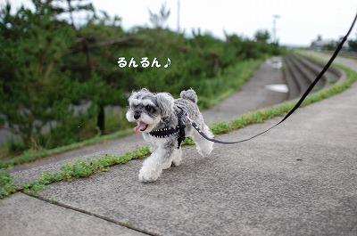 るんるん11