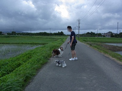 田んぼ道1