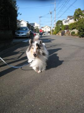 ニコニコ散歩