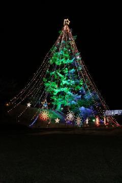 関東最大のクリスマスツリー