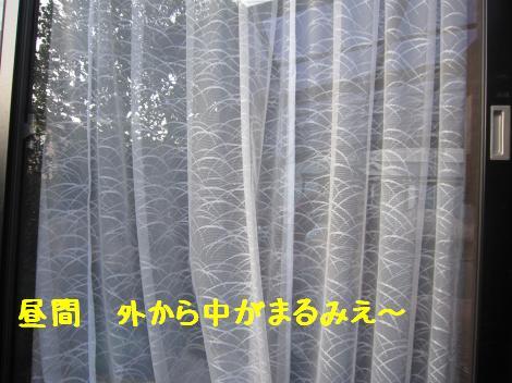 IMG_5863_convert_20101230135338.jpg