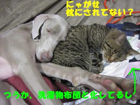 IMG_6231_convert_20101220100630.jpg