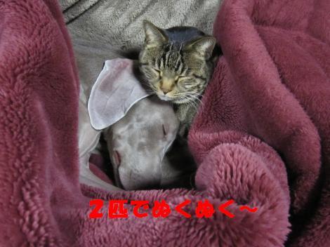 IMG_6235_convert_20101220100638.jpg