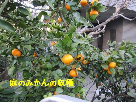 IMG_6333_convert_20101230135614.jpg