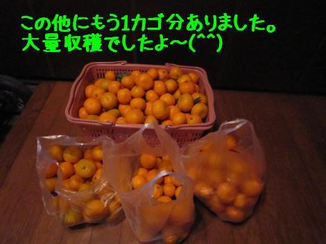 IMG_6337_convert_20101230135632.jpg