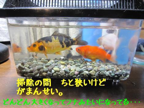 IMG_6419_convert_20101230135848.jpg