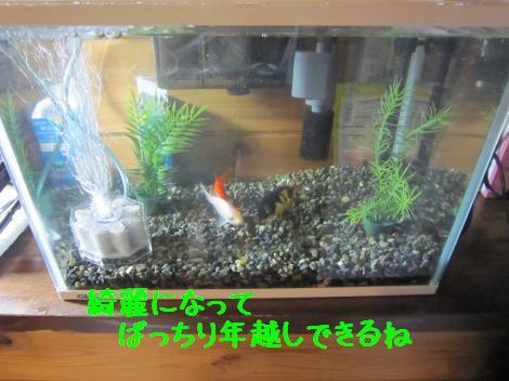 IMG_6420_convert_20101230135906.jpg