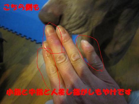 IMG_6659_convert_20110124115110.jpg