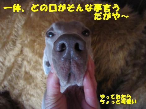 IMG_6778_convert_20110203100544.jpg