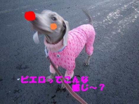 IMG_6894_convert_20110210131016.jpg