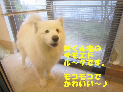 IMG_6927_convert_20110215104048.jpg