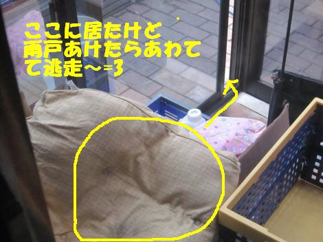 IMG_6940_convert_20110223130354.jpg