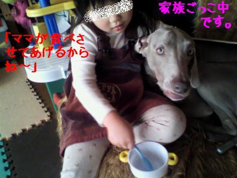 P1010055_convert_20101230140715.jpg