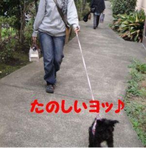 トト初散歩