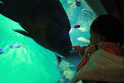葛西水族館4