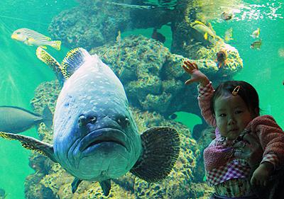 葛西水族館2