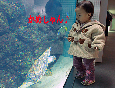 葛西水族館1