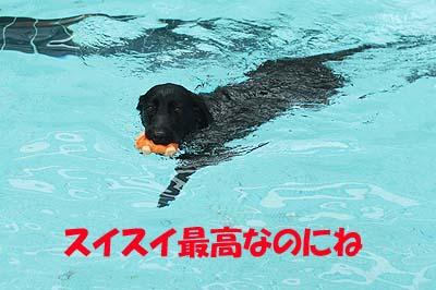 woof06_20110912170011.jpg