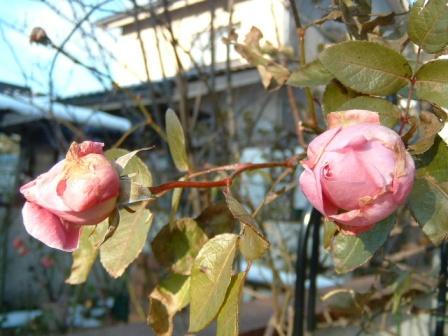 mary-rose10-16.jpg