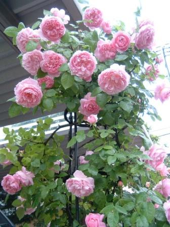 mary-rose10-17.jpg