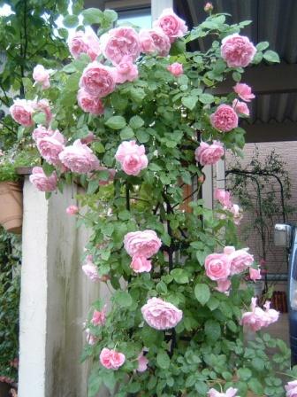 mary-rose10-18.jpg