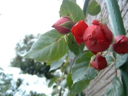 rouge11-1.jpg