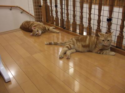 体をやすめるバンビとライオン