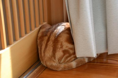 隠れてるつもり