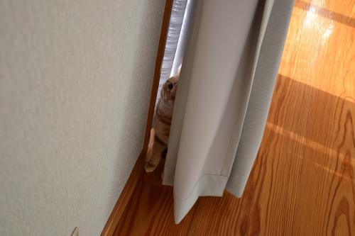 まずはここに隠れて
