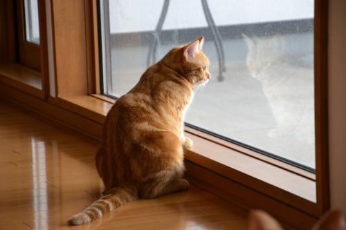窓拭かないとだめですよ