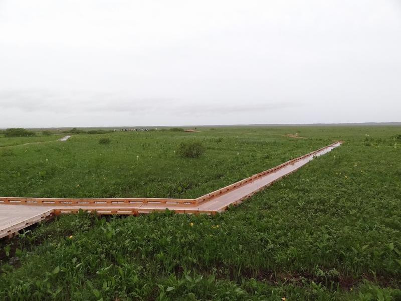 DSC00213(800x600)サロベツ湿原2