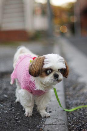 リリーくんの散歩...。