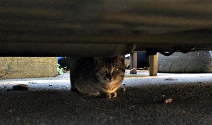 猫ブログ ランキング