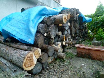伐採木2012
