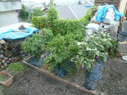 残り夏野菜
