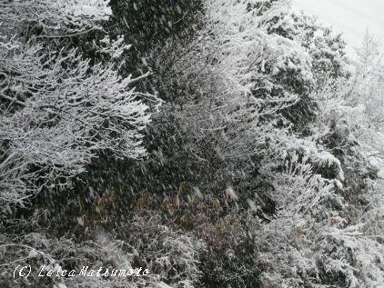 突然の降雪