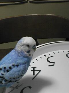 時計と上様