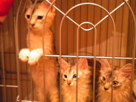 大学構内から保護された子猫達