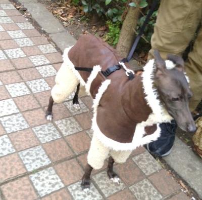 aコートの犬