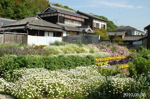 粟島花畑1 (600x399)